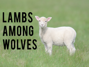 lamb+among+wolves